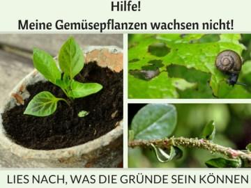 Gemüsepflanzen wachsen nicht