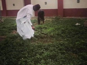 Borno'S Youngest Emir, The Shehu Of Bama Was Seen Cutting Grasses 1