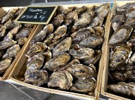 Austern auf dem Fischmarkt in Le Havre