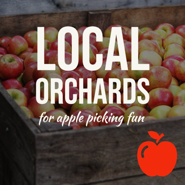 Why You Need to Go Apple Picking this Year (And Post it on Social Media)