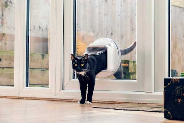 SureFlap_Microchip_Cat_Flap_Connect_Milo_Coming_In_1_Small