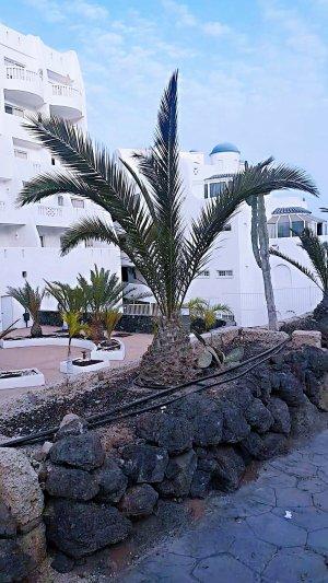 Golf de sur Resort TENERIFE