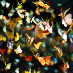 Beautiful glowing walls of butterflies