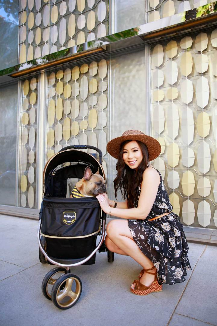 An Dyer with Diesel French Bulldog Ibibaya Luxury Pet Dog Stroller in Beverly Hills