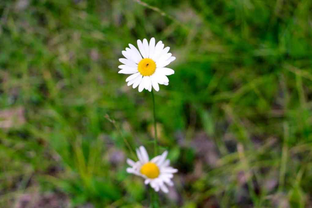 Love all the wild daisies!