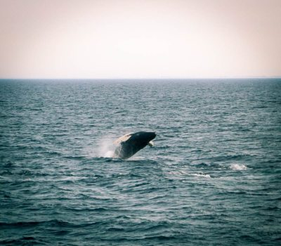 Cape Cod Whale Watching