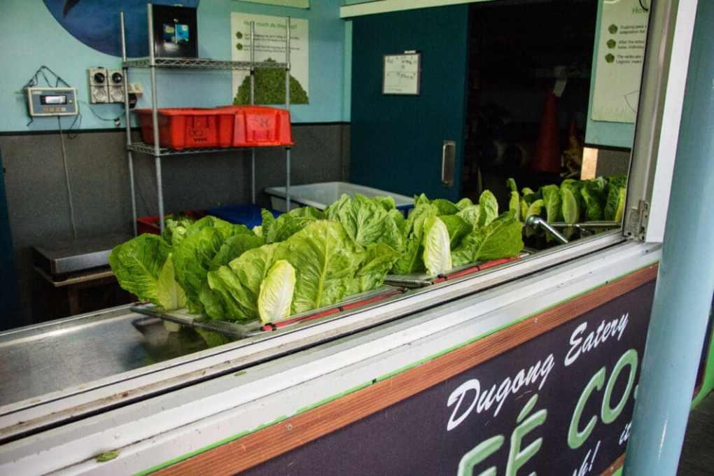 dugong salad bar