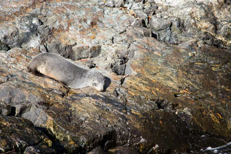 seal Milford Sound