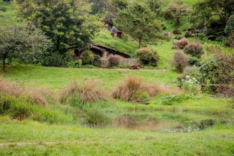Frog pond in Hobbiton