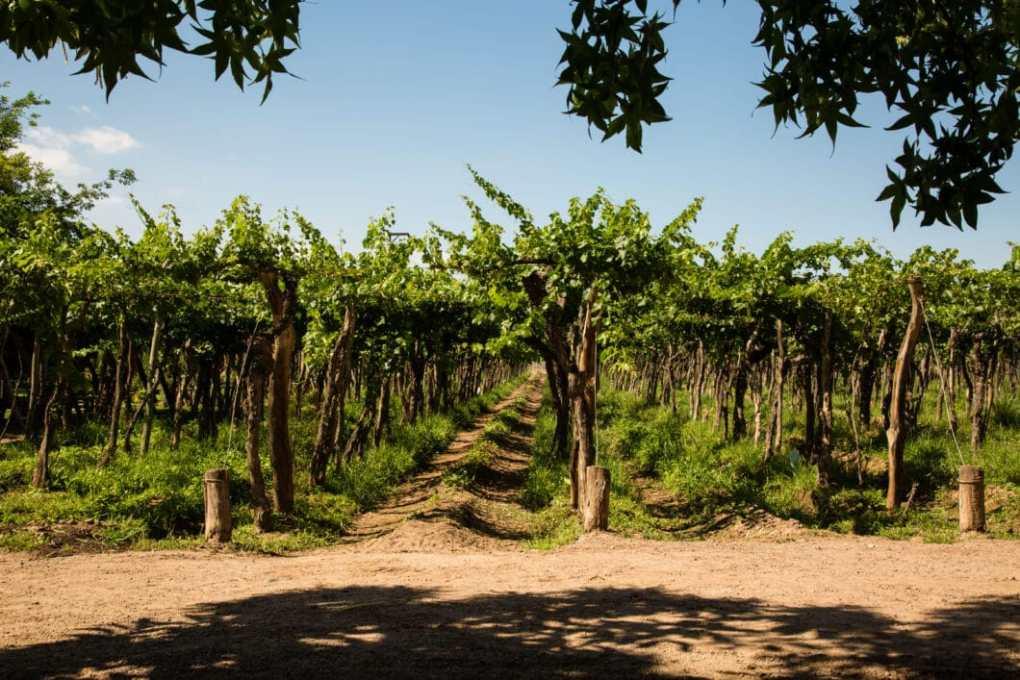 Mendoza, Argentina vineyard