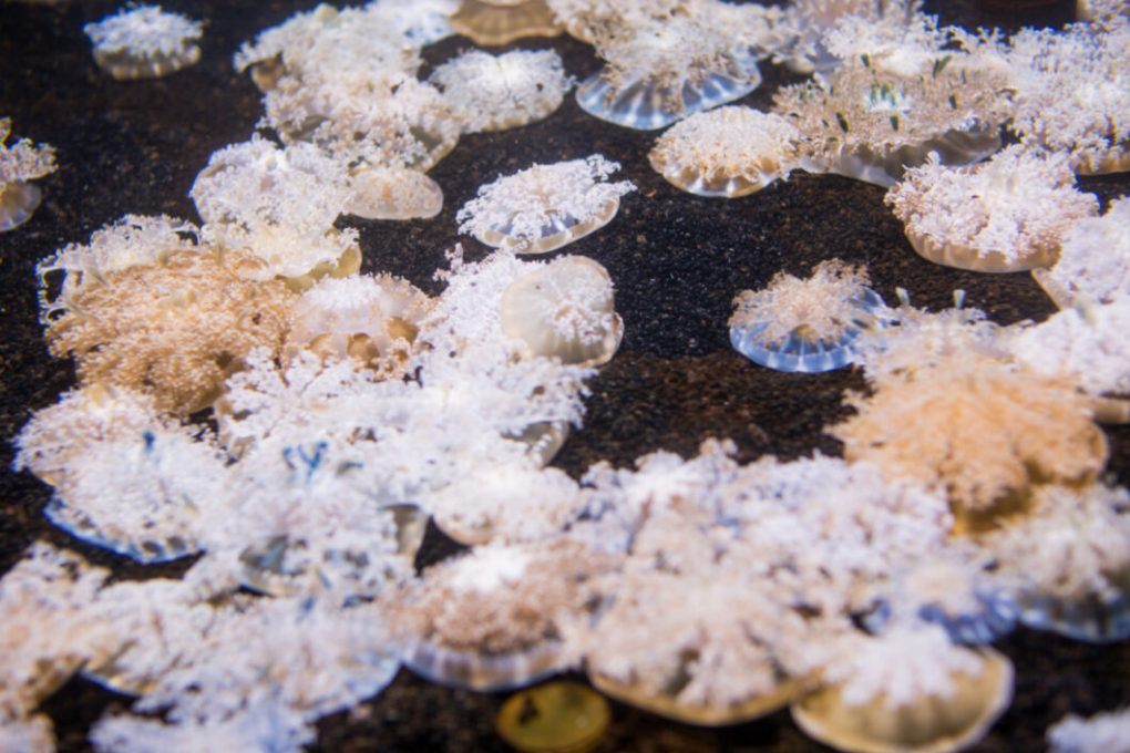 Ripley's Aquarium of Myrtle Beach Review - Luvin' Beach