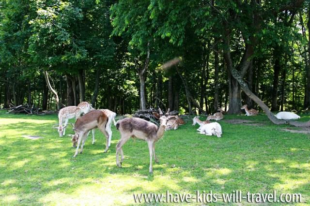 VA Safari Park 17