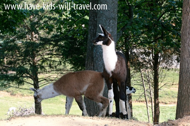 Surprising Things We Saw At Virginia Safari Park www.have-kids-will-travel.com