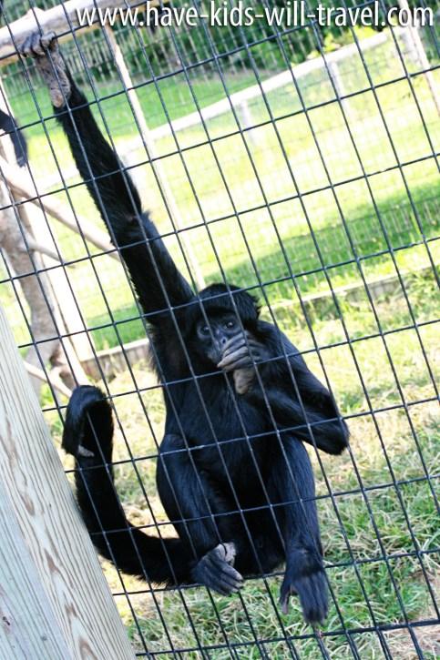 VA Safari Park 7