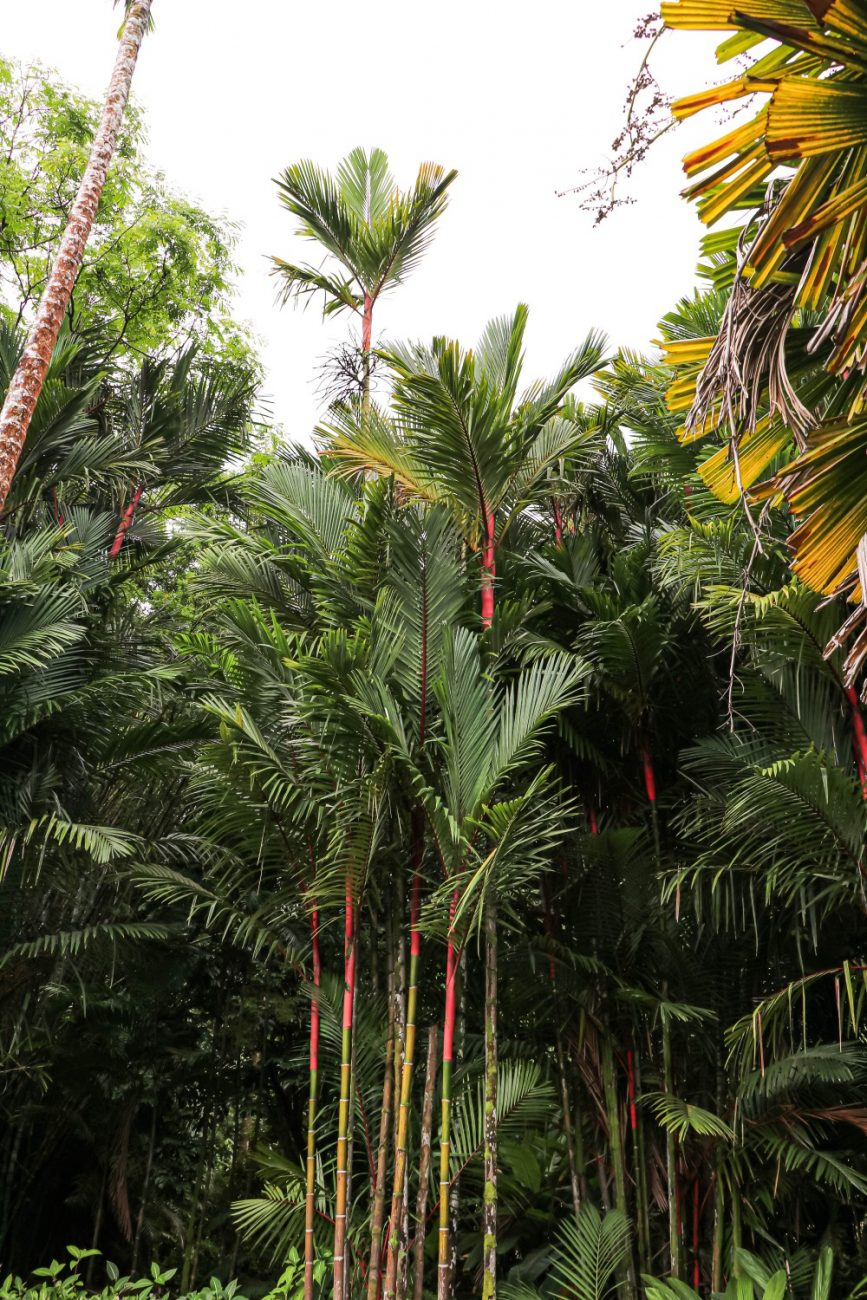 One of the most beautiful and instagram worthy spots in Oahu is the Ho'omaluhia Botanical Gardens. Its a must when visiting Oahu! Click on over to the blog to get all my tips for making the most of your visit! #Ho'omaluhiaBotanicalGarden #oahuhawaii #instaworthyspots #travelblog #traveltips #visitoahu