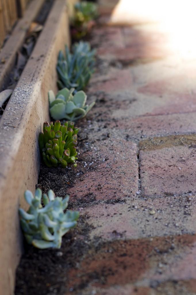 Patio design DIY succulents brick patio addition succulent garden patio design challenge