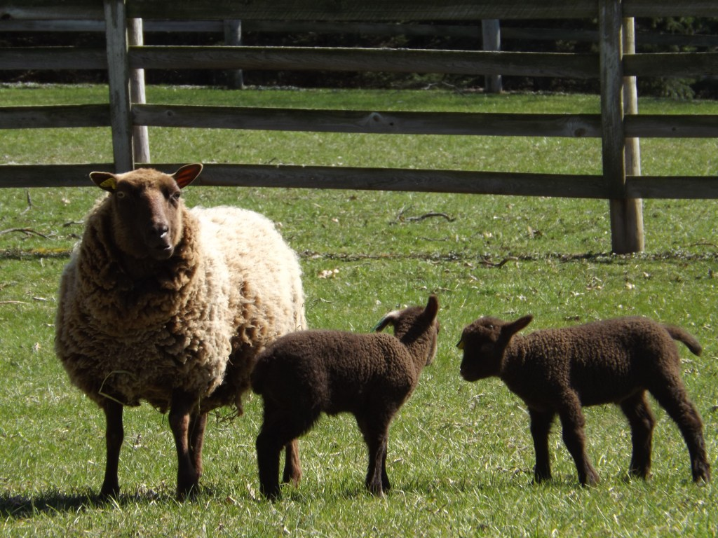 Happy Spring to Ewe!