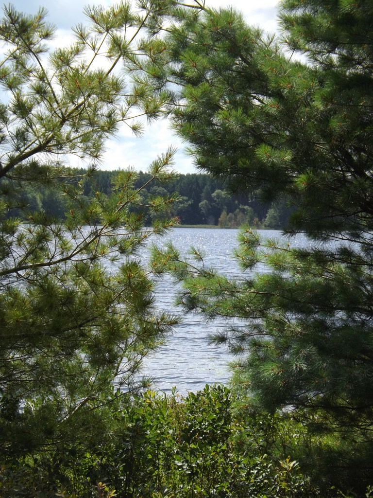 Water through the Pines