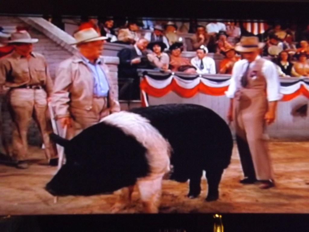 Boar Judging