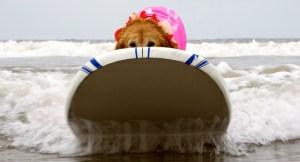 2011 Surf dog Surf-A-Thon at Del Mar Beach