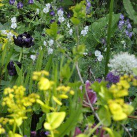 Lundgylden, tulipaner, prydløg, bølgekronet storkenæb.