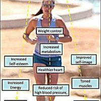 Effects of physical activity on our body