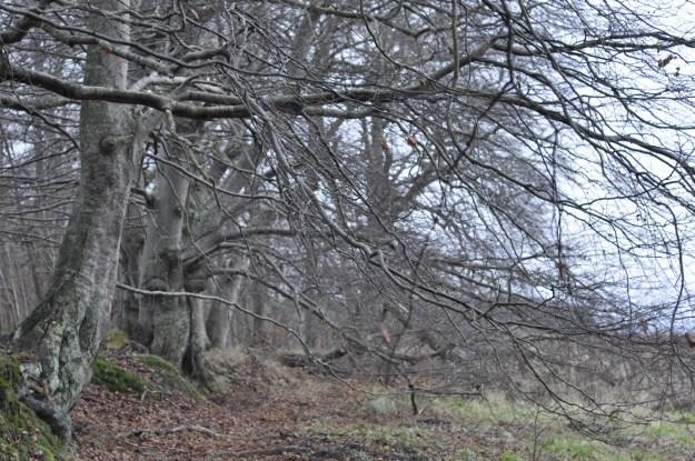Træer i landskabet