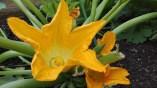 mit Blüte