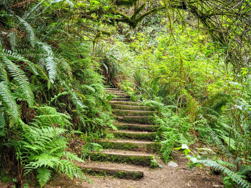 Mossy steps on a hiking trail
