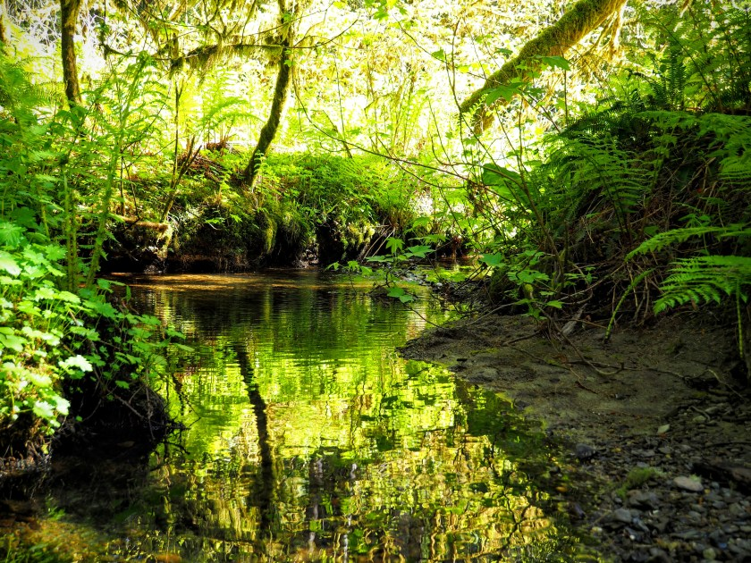 A quiet stream pool reflects the many shades of green of the deep forest.