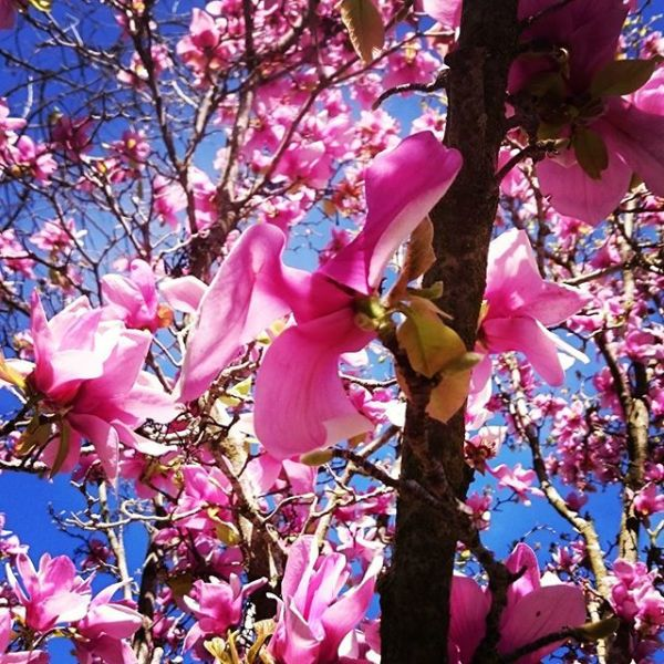 Everything makes me feel like it is spring. The weather is getting warmer and the finals are only three weeks away.