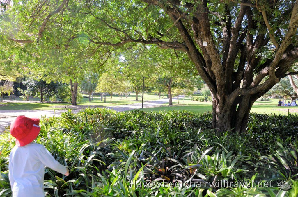 All Abilities Playground Brisbane Botanic Gardens