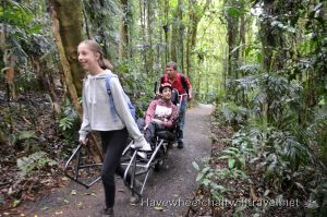 DORRIGO NATIONAL PARK – TRAILRIDER AND WHEELCHAIR ACCESS