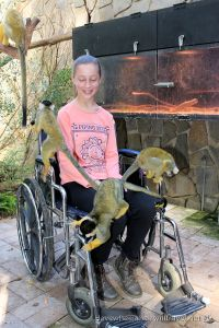 ADELAIDE ZOO – WHEELCHAIR ACCESS