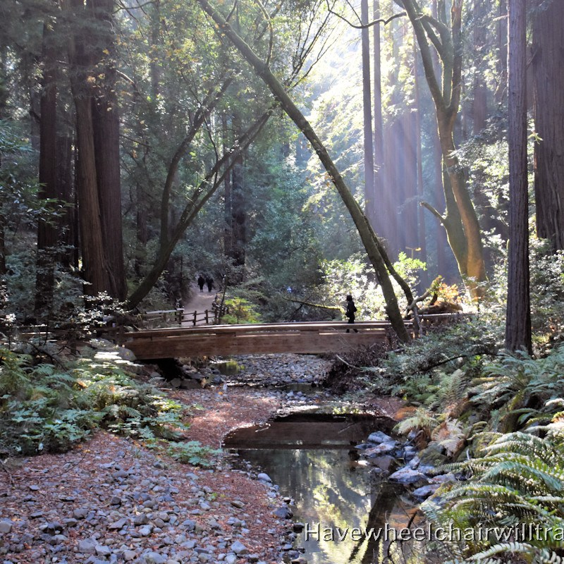 Muir Woods National Monument - accessible San Francisco - Have Wheelchair Will Travel