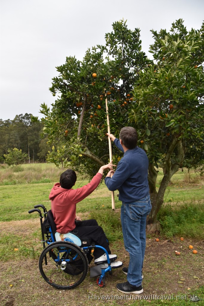 Orange picking Dooralong NSW - Accessible Sydney - Have Wheelchair Will Travel