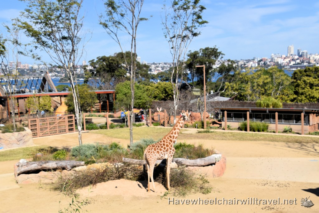 African Savannah precinct Taronga Zoo Sydney - Have Wheelchair Will Travel