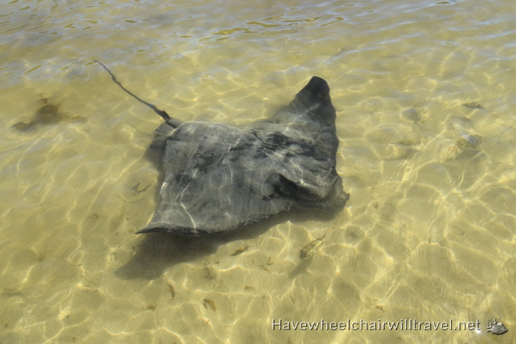 Stingrays Bendalong Boat Harbour Beach - accessible beach experience - Have Wheelchair Will Travel