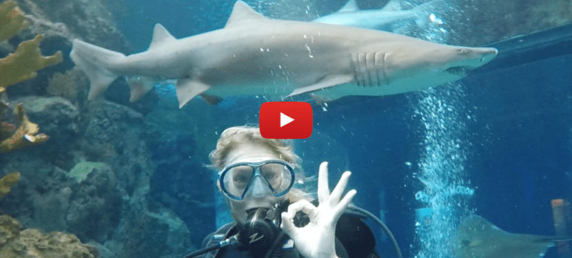 Swimming With Sharks!