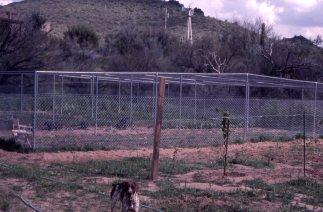 Jones garden in 1980