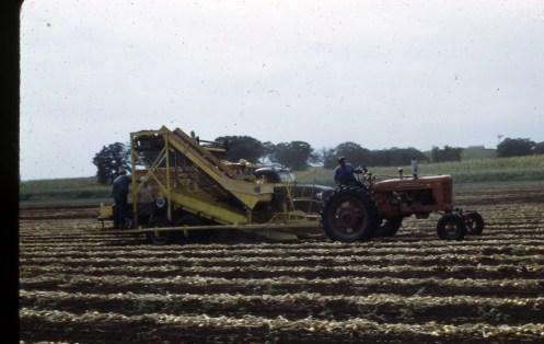 Onion Harvester 1950s