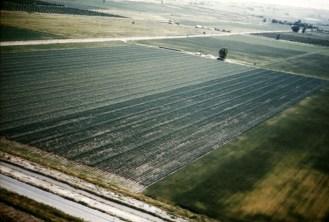 Onion seed prod hybrid field