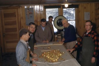 Onion sorting with Jones Greeley 1952