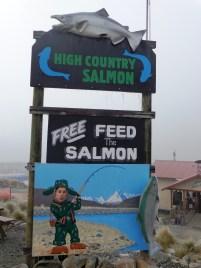 jo-salmon-town