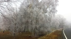 twizel-frozen-trees