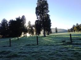6 misty trees
