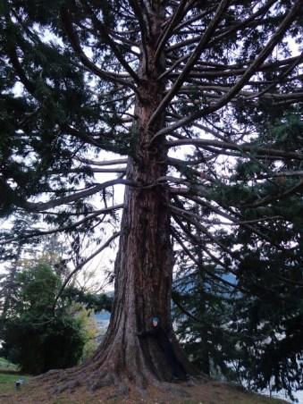 E tree hugging Queenstown