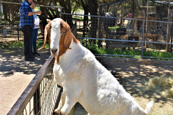Petting Zoo at the Austin Zoo