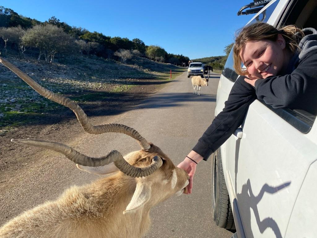 Natural Bridge Wildlife Ranch Drive Thru Animal Park San Antonio Texas