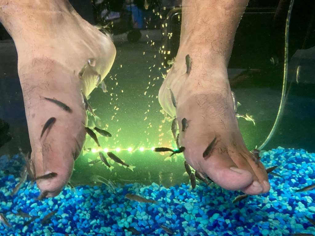 Fishy Kisses at Sea Quest Aquarium, where you can pay to have little fish eat the dead skin off your feet!